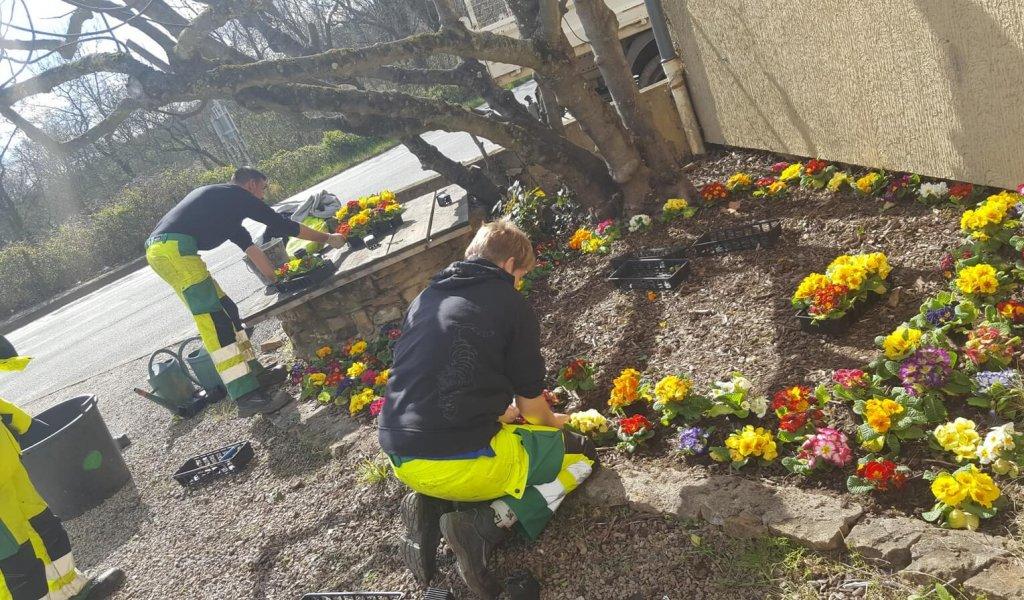 Une équipe qui met en place un massif de fleurs.