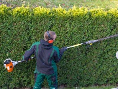 Un jardinier taille une haie avec un taille-haie à essence. Façonnage d'un mur de thuyas
